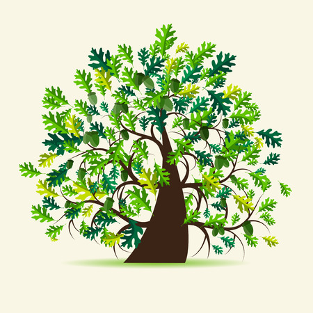 leaves vector: Oak tree, summer Illustration