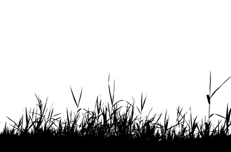 uncultivated: Grass silhouette black