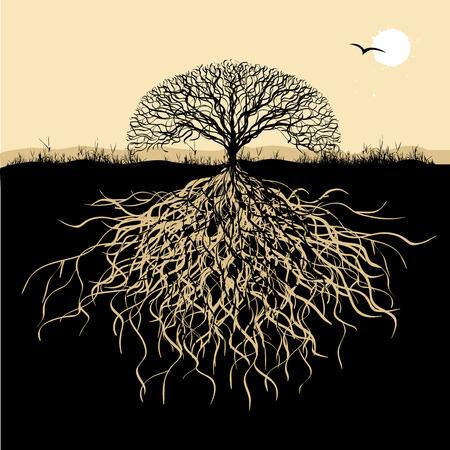 albero della vita: Silhouette albero con radici Vettoriali