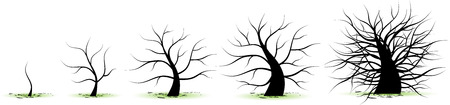 Life stages of tree: childhood, adolescence, youth, adulthood, old age Vector