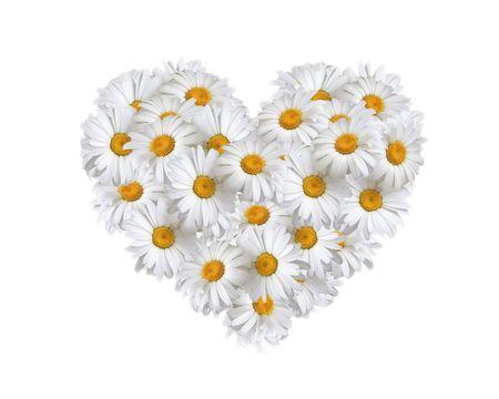 hart bloem: Liefde, hart van daisies Stockfoto