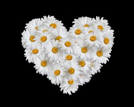 Love, heart of daisies photo