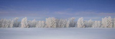 snowfall: Winter forest beautiful