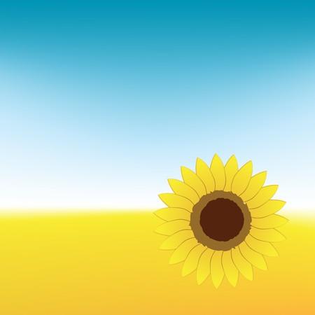Sunflower on summer field Vector