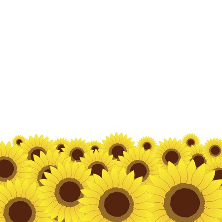 Summer meadow, sunflowers background for your design Vector
