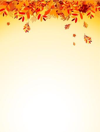 foglie di quercia: Autumn leaves sfondo per il tuo design