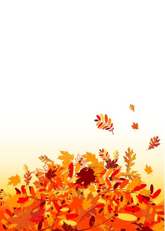 autumn leaves falling: Autumn leaves background for your design