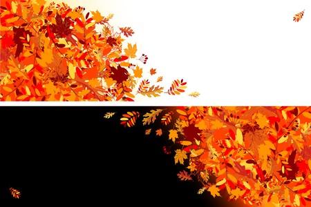 autumn leaf frame: Banners para el dise�o de hojas de oto�o