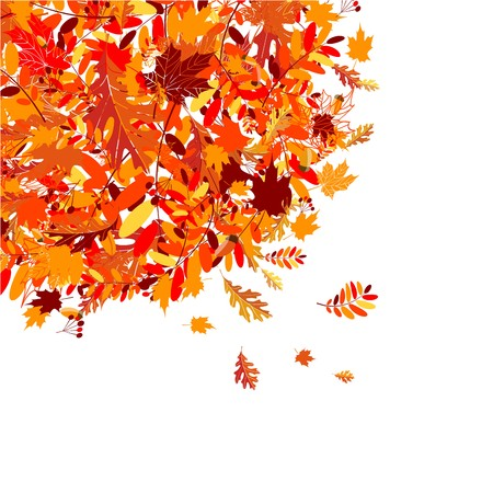 rowan tree: Autumn leaves background for your design