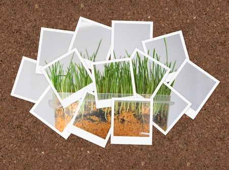 Grown grass, collage of photos for your design Stock Photo - 10292668