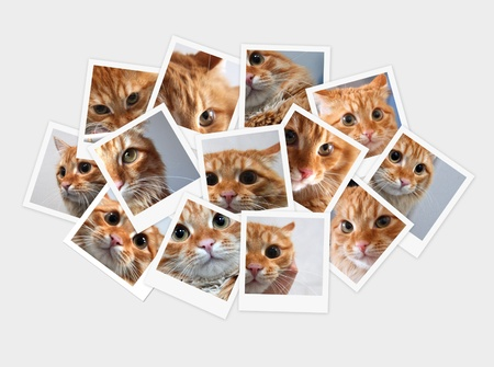 Funny orange cat, collage of photos for your design photo