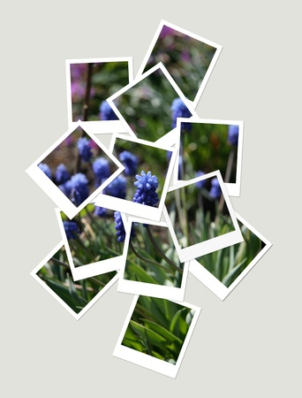 Flowers, collage of photos for your design photo