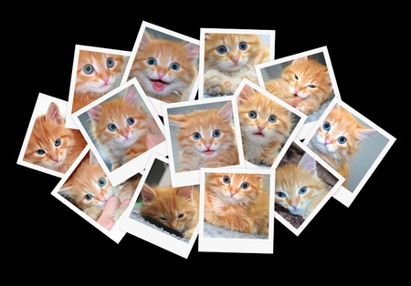 snapshot: Funny orange kitten, collage of photos for your design Stock Photo