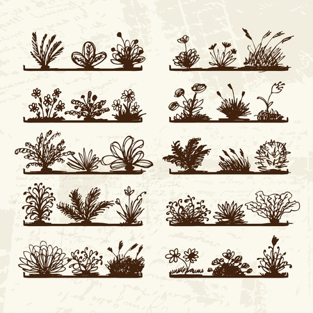Sketch of plants on shelves for your design  Vector