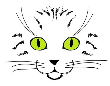 gato dibujo: Cara linda del gato, dibujo a mano para su diseño Vectores