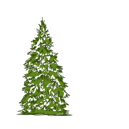 evergreen: Pine tree isolated on white, sketch for your design