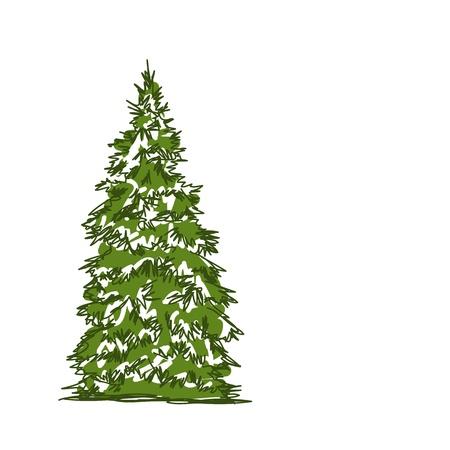 coniferous forest: �rbol de pino aislado en blanco, bosquejo para su dise�o Vectores