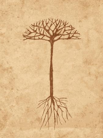 arbol raices: Sketch árbol con raíces en el papel viejo del grunge