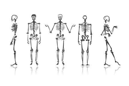 scheletro umano: Schizzi scheletro per il vostro disegno Vettoriali