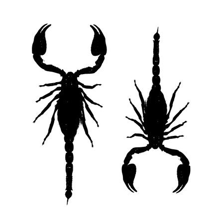 starsign: Scorpions, black silhouette for your design Illustration