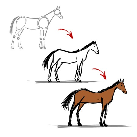 Stages of drawing horse sketch  Vector