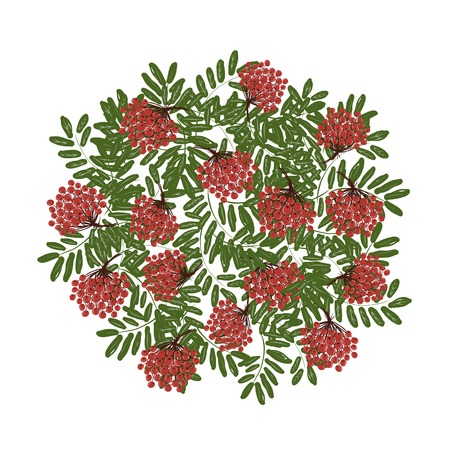 rowan: Rowan branch with berries, frame for your design