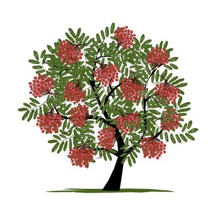 frutos rojos: �rbol de serbal con las bayas para su dise�o Vectores