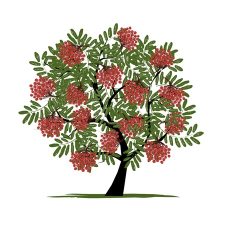rowan tree: Rowan tree with berries for your design