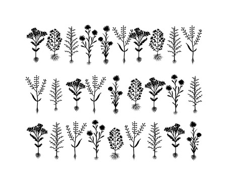 herbarium: Herbarium flowers with roots, sketch for your design