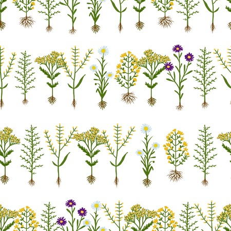 herbarium: Herbarium flowers with roots, seamless pattern, vector illustration Illustration