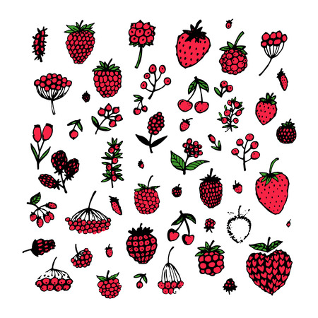 mountain cranberry: Berries collection, sketch for your design