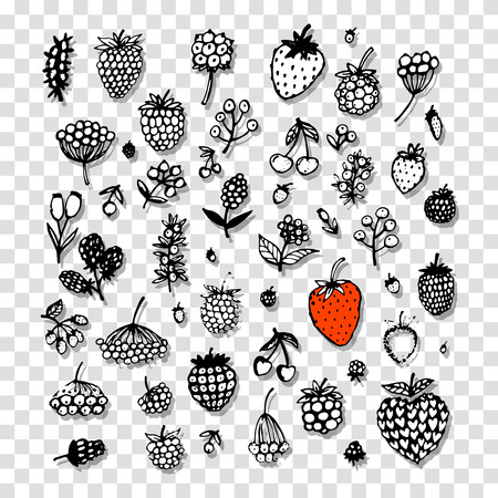 Berries collection, sketch for your design Vector