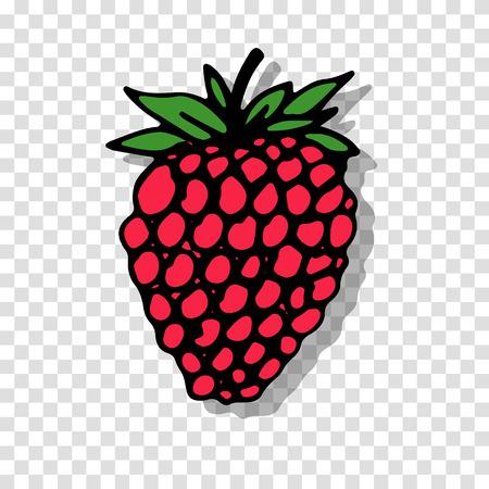 fondo transparente: Raspberry sketch on transparent background for your design