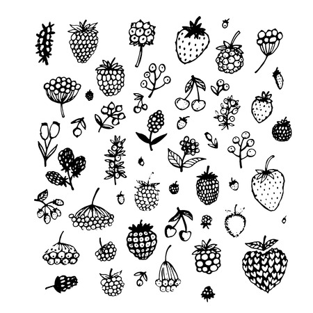 dewberry: Berries collection, sketch for your design. Vector illustration