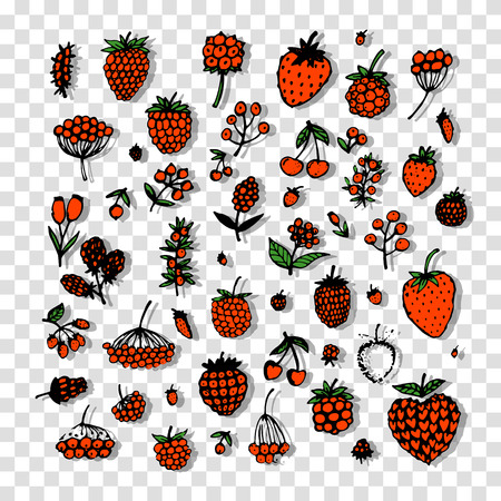 cranberry illustration: Berries collection, sketch for your design. Vector illustration