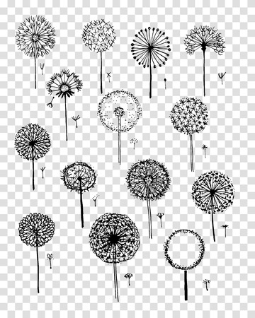Dandelions collection, sketch fro your design 向量圖像