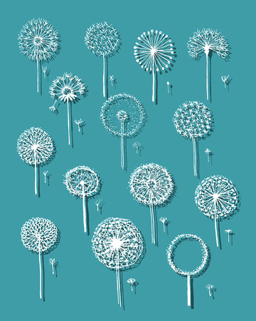 fro: Dandelions collection, sketch fro your design Illustration