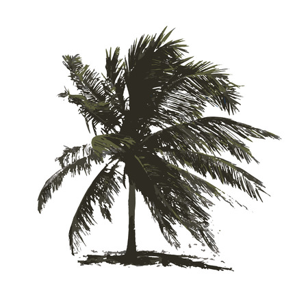 Tropical palm tree for your design. Vector illustration
