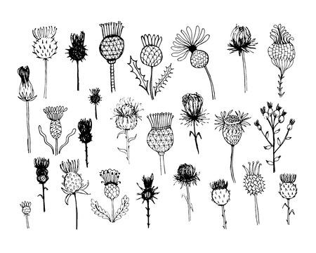 ostrożeń: Rzepik kolekcji roślin, szkic do projektowania. ilustracji wektorowych
