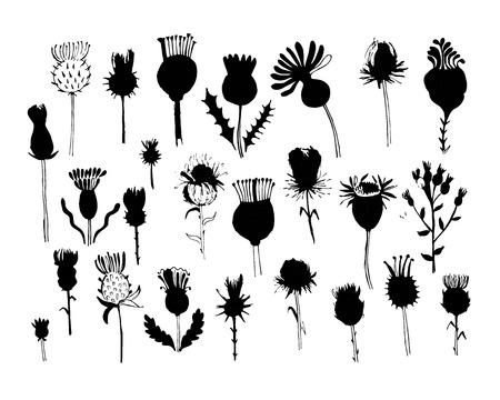 thistles: Agrimony plants collection, sketch for your design. vector illustration