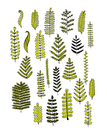organic background: Leaf set, sketch for your design. Vector illustration