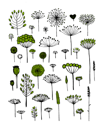 dill: Floral collection, sketch fro your design. Vector illustration