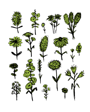 to and fro: Collection of wildflowers, sketch fro your design. Vector illustration Illustration