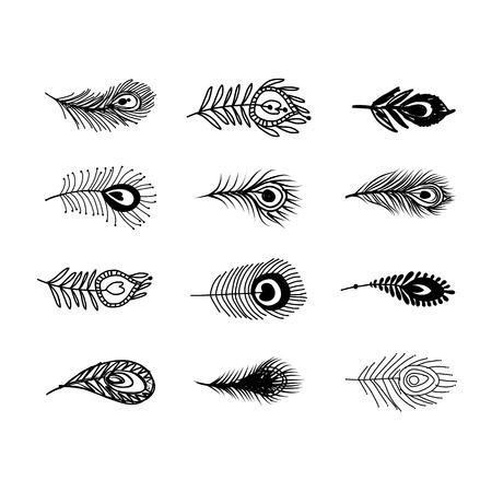 piuma bianca: Piume di pavone fissato per la progettazione. Illustrazione vettoriale Vettoriali