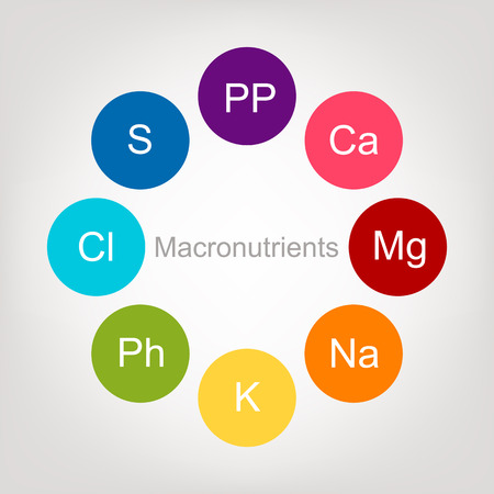 magnesium: Vitamins collection for your design. Vector illustration
