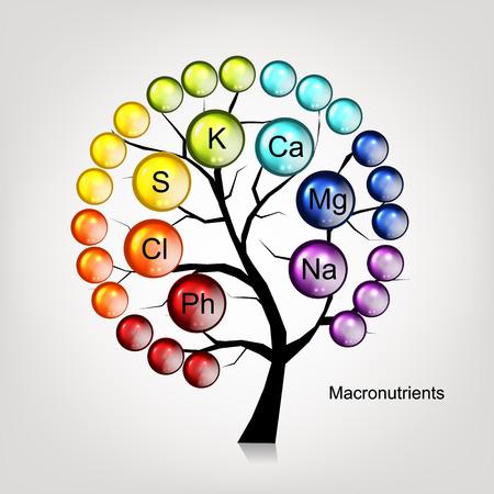 magnesium: Vitamins tree concept for your design. Vector illustration Illustration