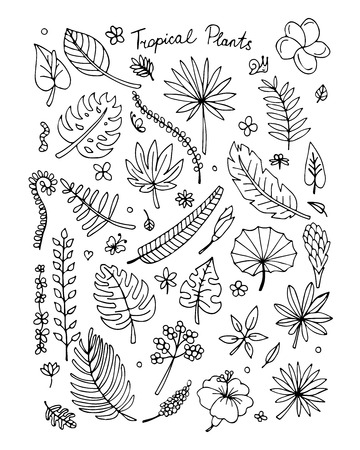 ferns and orchids: Tropical plants, sketch for your design.