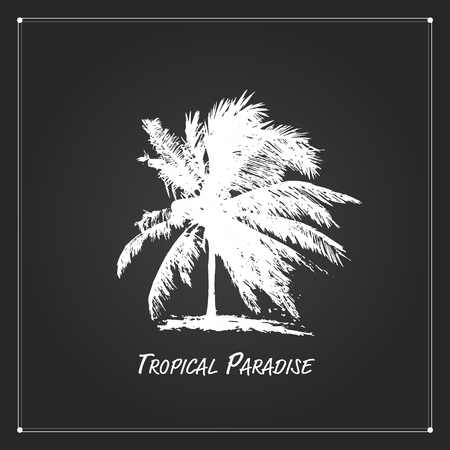 tropical tree: Tropical palm tree for your design. Vector illustration