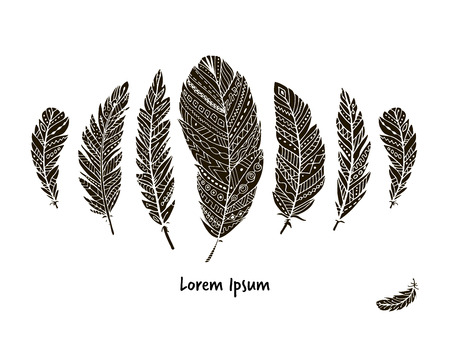 illustration collection: Feather collection for your design. illustration