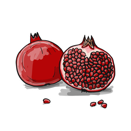 Pomegranate, sketch for your design. Vector illustration